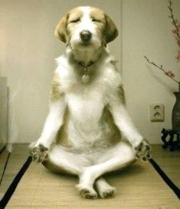 Zen Puppy