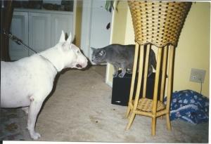 Jaxson&Rocky
